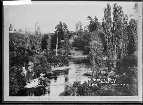 View of the Waikato River at Cambridge. Photograph...