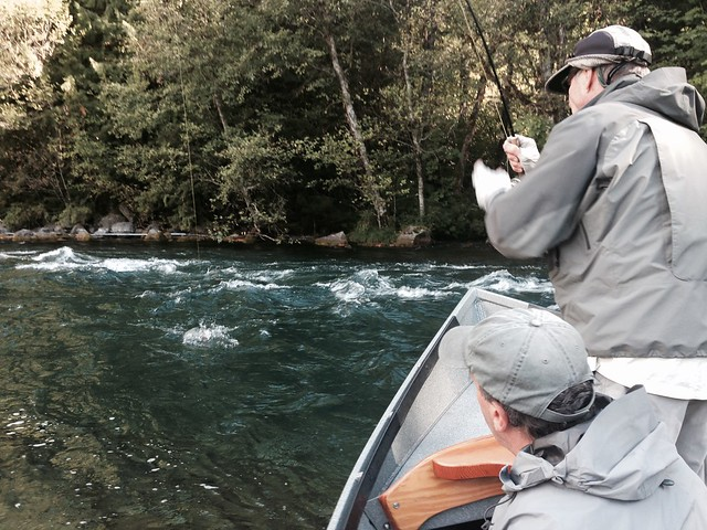 fly fishing the mckenzie river
