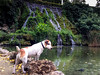 Dog and his turtle friend by iphoto.geri