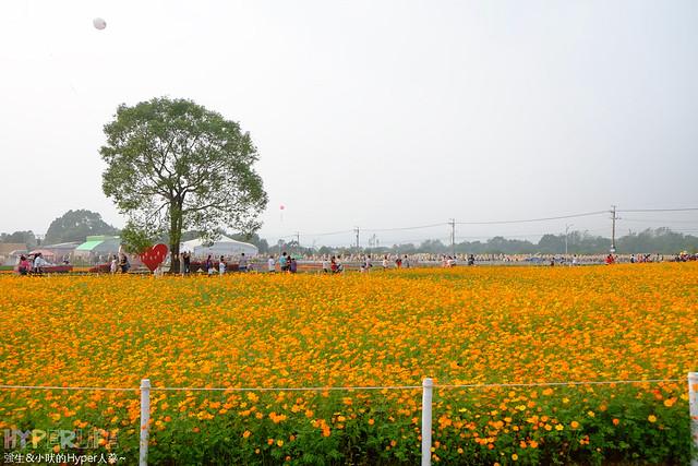 2015台中新社花海24