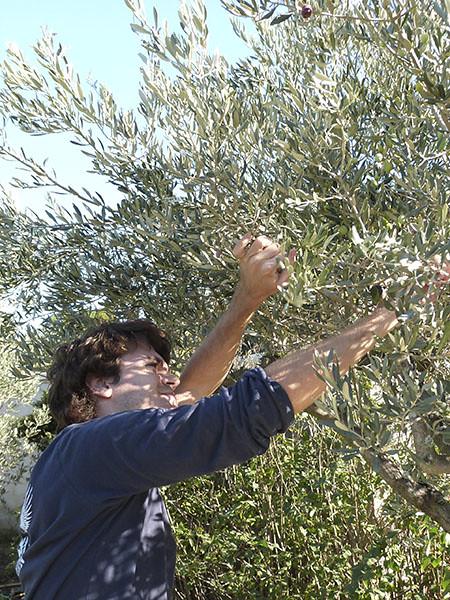 paul dans  l'olivier