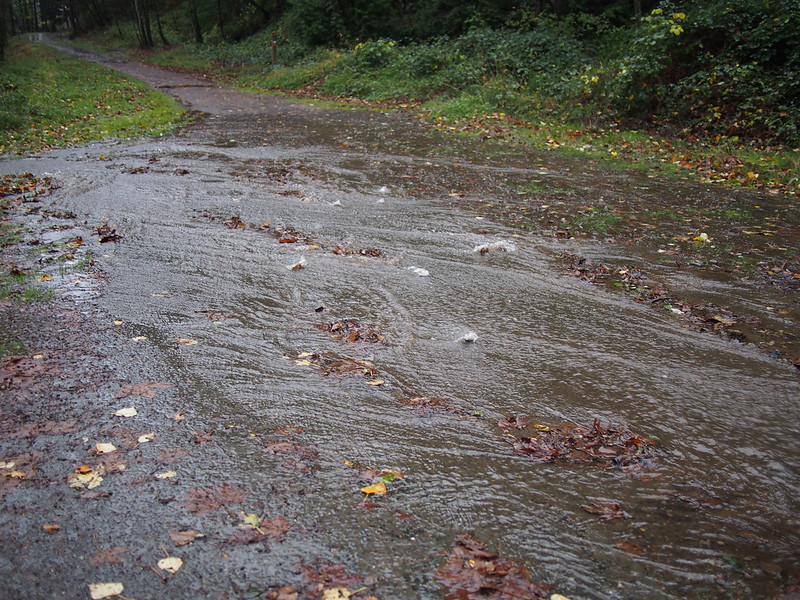 Flooded Issaquah–Preston Trail: Much of the trail acted as a creek bed with an inch of water flowing downhill with wet leaves causing pooling.  There were a couple places where creeks flowed across the trail, and there were places with 2–4 inches of flowing water.
