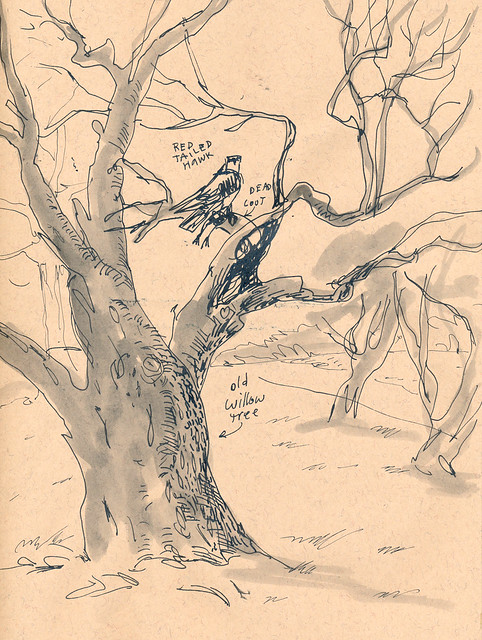Sketchbook #93: Red Tail Hawk