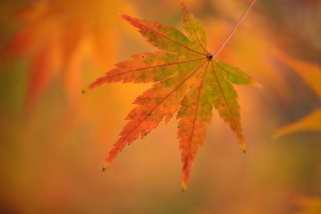 紅葉...
