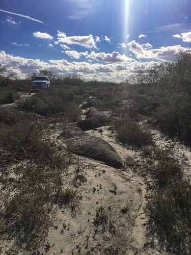 landscape us texas unitedstates cbc odem mikaelbehrens nuecesdeltapreserve