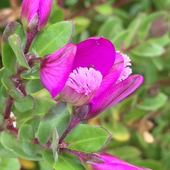 IMG_2104_Purple Flower