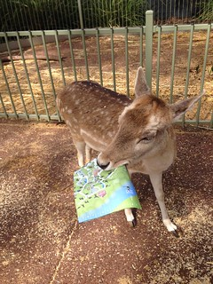 A deer ate our map