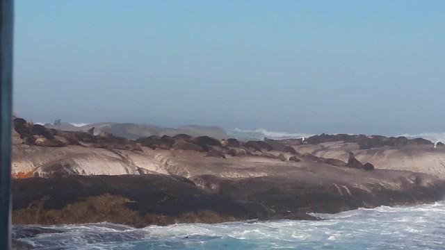 Seals colony on Seals Island