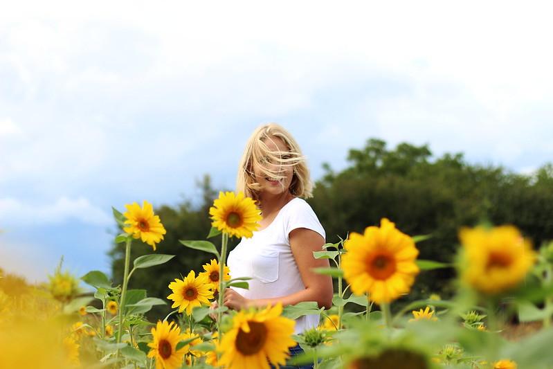 Sonneblumenfeld Alisha September 2015 134gimp