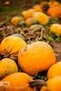 Pumpkin day by IdaBirova http://bit.ly/1Z8g2Xg #Halloween