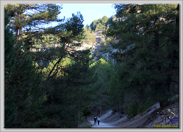 Cañón del río Lobos (4)