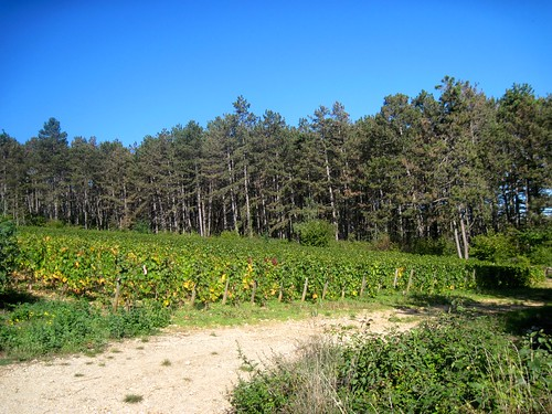 Vineyard Hike in Beaune (Best of the Holidays)