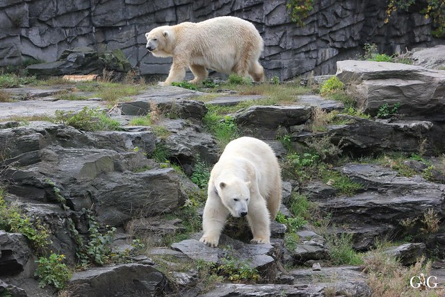 Sonntags-Besuch im Tierpark Friedrichsfelde 04.10.201518