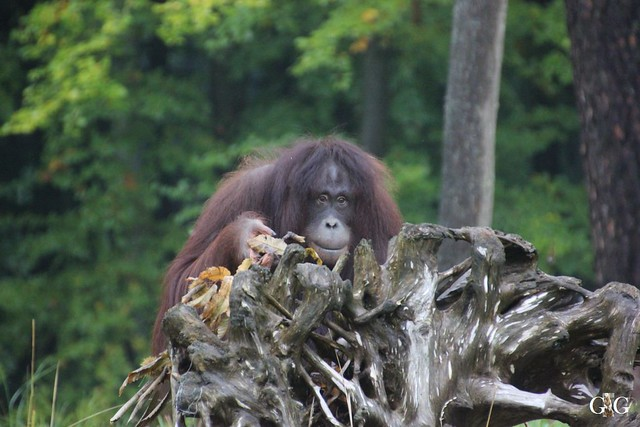 Besuch Zoo Rostock 17.10.201550