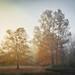 AUTUMN SUNRISE by Lisa Plymell