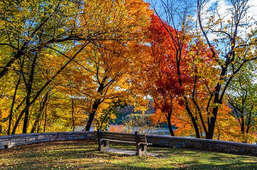 autumn red tree fall leaves mississippi bench pentax outdoor foliage mississippiriver serene