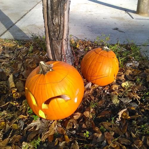 Roadside pumpkins #toronto #halloween #dovercourtvillage #pumpkins #dovercourtroad #dupontstreet