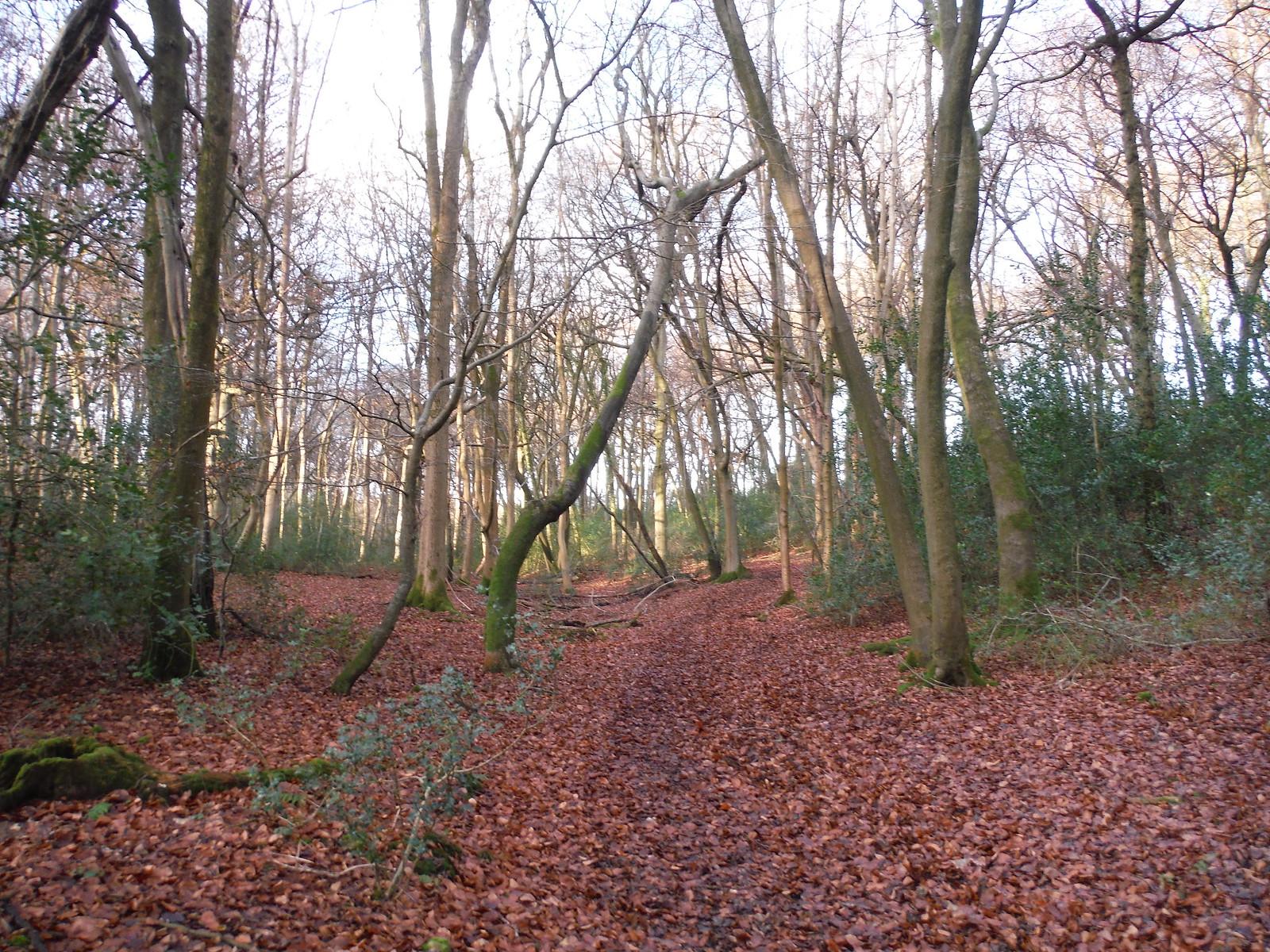 Wintry scene in Lownde's Wood SWC Walk 140a Wendover to Great Missenden