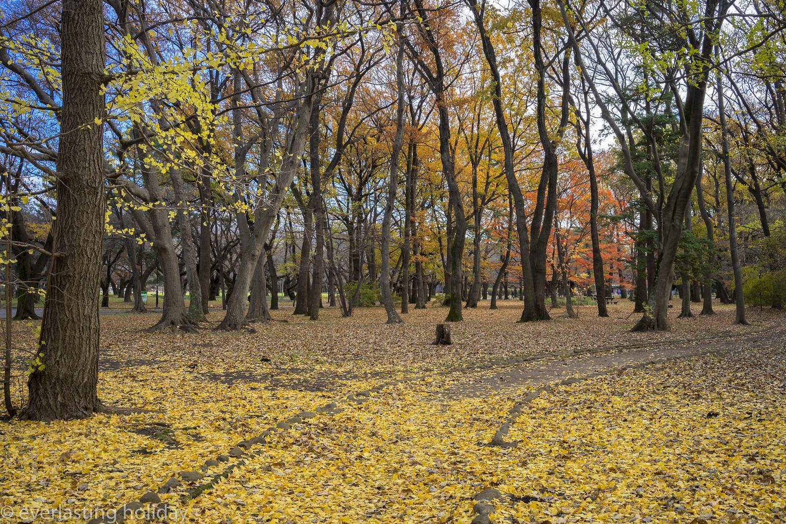 小金井公園 Koganei Park-0011