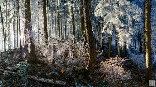 feldkirch vorarlberg liechtenstein at austria winter forest wood cold sun hoar frost white panorama chaos christmas pure splendit glistening light space