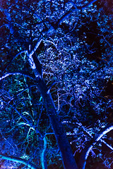 Blue haunting