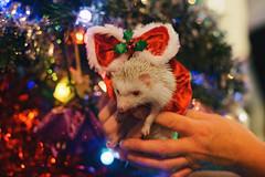 Doris the Christmas Hedgehog
