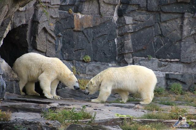 Tierpark Berlin 16.08.2015  013