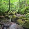 水辺💦 #戸隠神社 #戸隠古道 #沢 #長野 #oldroad #river #trail #japanese #japan by oku_coo88ool