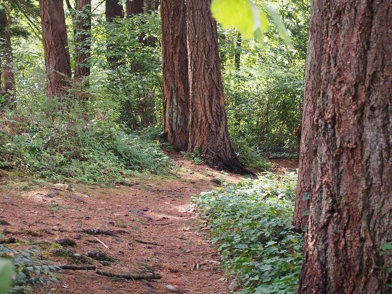 Rainier Greenway