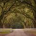 Wormsloe Plantation, Savannah, Georgia by FotoByOliver