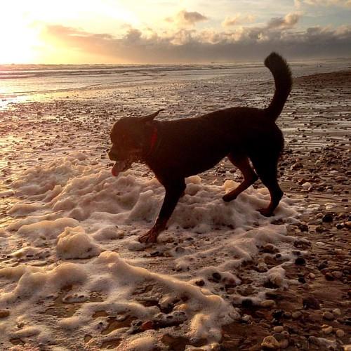 Porter. Sea spume. 🐕💨😊