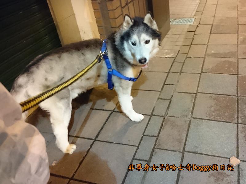Doggy颱風21