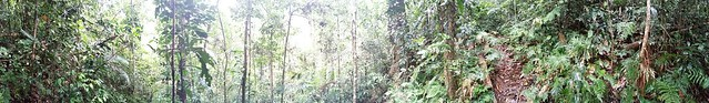 Panoramic view of the Bobbin Bobbin Falls trail, Mount Bartle Frere