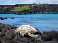 turtle paradise