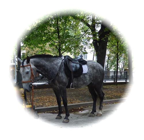 a Russian horse