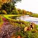 Autumn Colours by billdsym