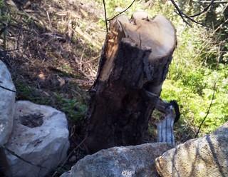 Rutigliano-Segati 19 alberi secolari di Rutigliano (6)