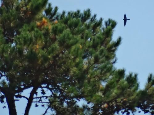 statepark bird fall virginia