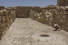 Dead Sea & Masada022