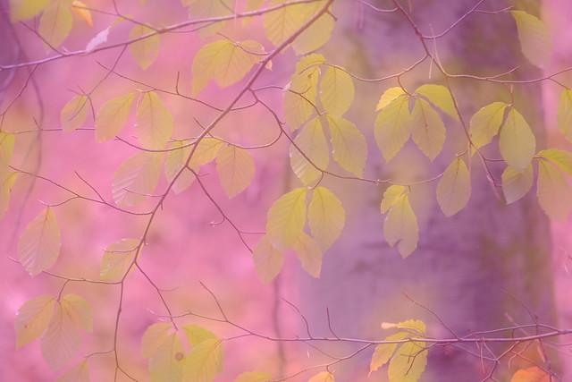 Pastel autumn colors
