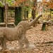 Elephant in a Rock Garden (in Explore) by frank thompson photos