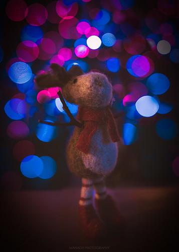 Reindeer // 17 12 15