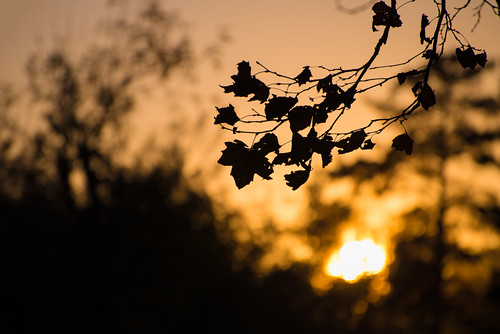 california ca sunset orange tree leaves us unitedstates bokeh winecountry healdsburg