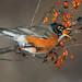 Orange Swallow by Gary Fairhead