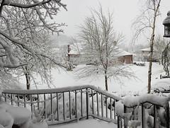 Snowy front Yard - Snowpocalypse 2017_09