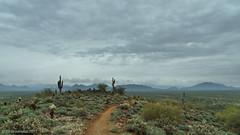 Northern Sonora Desert