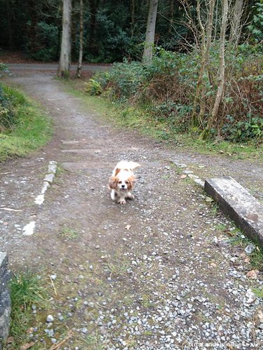 Mon, Mar 6th, 2017 Lost Female Dog - Menlough, Pollnabrone, Galway