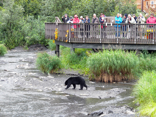 Visitors at the Crooked Creek Information Center in Valdez, Alaska looking at a bear and salmon