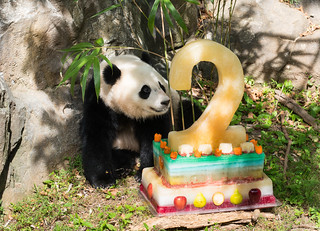 Bao Bao Celebrates Her Second Birthday