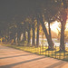 Golden light on the mall by Nathan_A_Jones